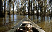 Caddo Lake in Uncertain, Texas. The 25,400-plus acre lake is the only natural lake in the state.(Vernon Bryant/Staff photographer)