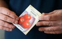 'Box Car Willie' is an heirloom tomato variety.(Jae S. Lee/Staff Photographer)