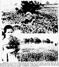 A 1938 image in <i>The Dallas Morning News'</i> archives of two children enjoying the vast field of bluebonnets and getting their picture taken.