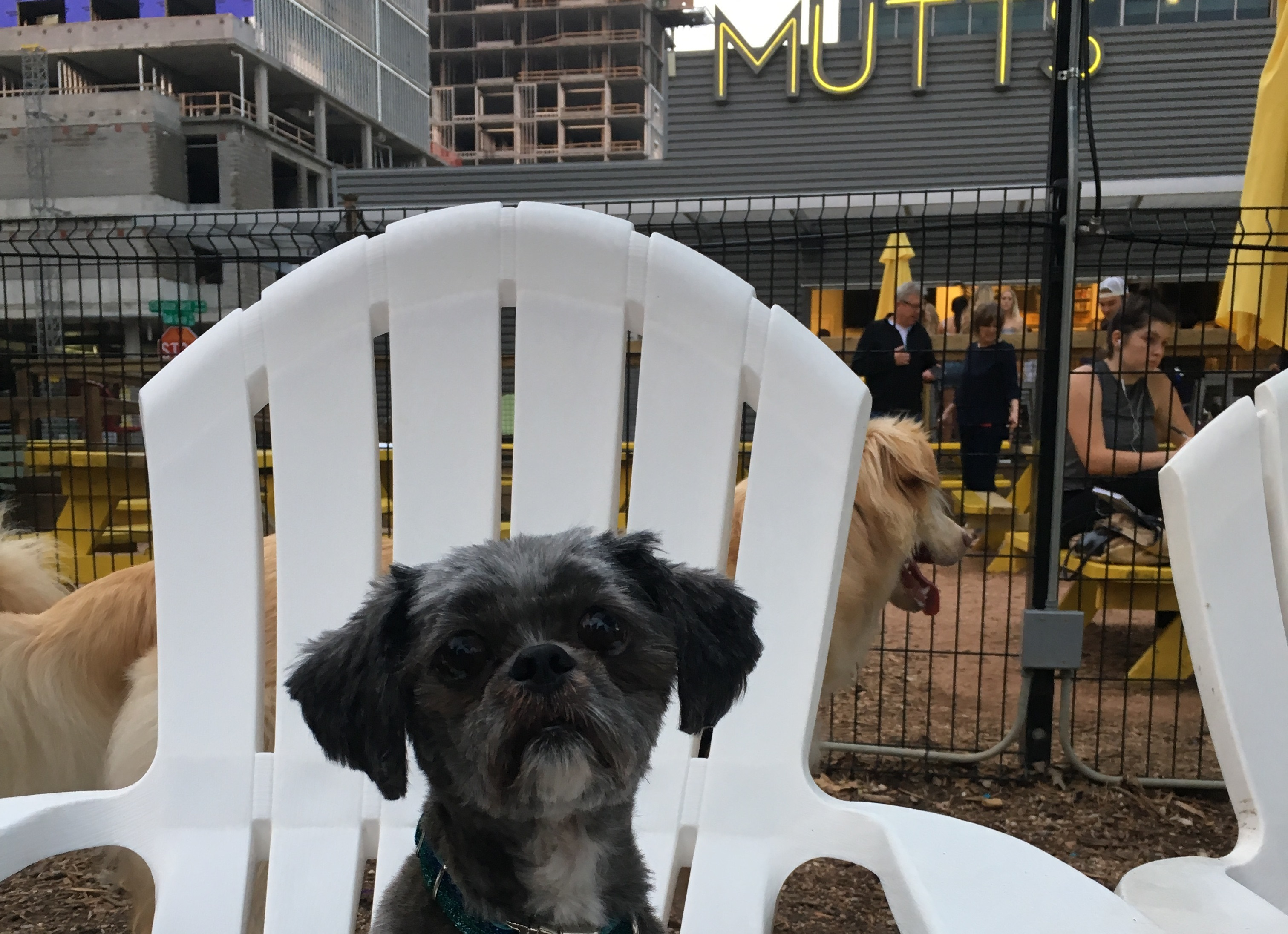 Dog About Town: Checking out a new brewery and more things to do | Pets |  Dallas News