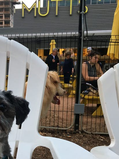 a3ef3605b Dog About Town: Checking out a new brewery and more things to do ...