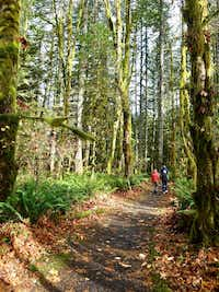 Visitors stroll one of the circular trails in the Wildwood Wetlands, part of the rainforest relatively close to Portland.(Robert N. Jenkins/Special Contributor)