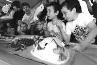 March 17, 1992: In homage to the tale of St. Patrick driving the snakes out of Ireland, the Dallas Zoo had a 17-foot snake cake.(Ken Geiger/The Dallas Morning News)