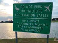 The signs around Bachman Lake would be updated to say it's illegal to feed the wildlife.