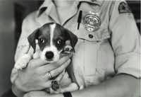 An animal control officer holds a mixed breed puppy about 8-10 weeks old at the Oak Cliff Animal Shelter in 1987.(Paula Nelson/The Dallas Morning News)