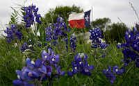 In this March 19, 2016, file photo, the Texas flag flies near a field of bluebonnets near Navasota. (David J. Phillip/The Associated Press)