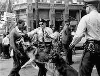 A 17-year-old civil rights demonstrator, defying an anti-parade ordinance in Birmingham, Ala., is attacked by a police dog in this May 3, 1963 file photo. During a meeting at the White Housethe next day, President Kennedy discussed the photo which had appeared on the front page of that days New York Times. (Bill Hudson/AP)