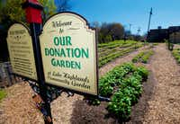 All of the food grown in the Donation Garden at the Lake Highland Community Garden is given to food banks.(Brandon Wade/Special Contributor)