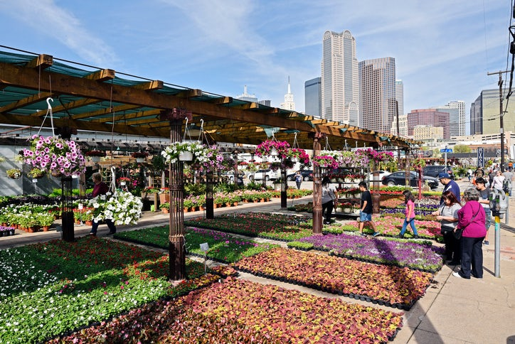 A Variety Of Plants Are Displayed For Outside Ruibal S Texas At The Dallas Farmers Market