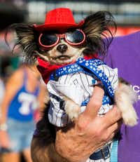 MoMo had plenty of team spirit at the Texas Rangers' annual Bark in the Park event last year.(Ashley Landis/Staff Photographer)
