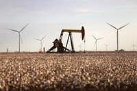 Pump jacks and wind turbines are visible inside a cotton field near Lamesa.(File Photo/The Associated Press)