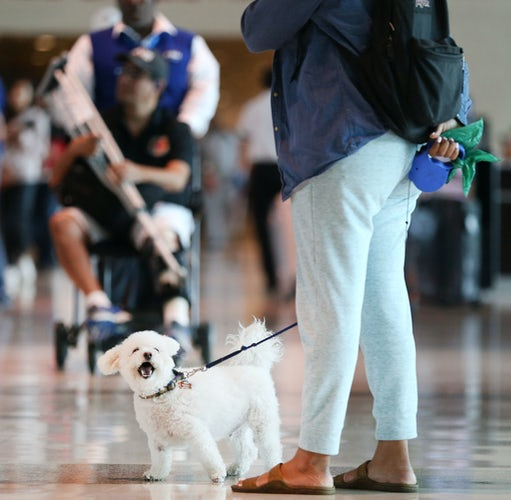 Pets on a Plane: 751,000 Emotional Support Animals in 2017