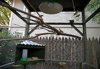 The aviary is a large home for Mariana Greene's diamond doves.(Jae S. Lee/Staff Photographer)