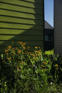 Wildflowers bloom at The Cottages at Hickory Crossing.(Tom Fox/Staff Photographer)