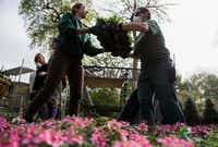 Renee Head and Dorothy Cockreham of the Dallas Arboretum horticulture team unload plants for the All-America Selections trial garden area.(Ashley Landis/Staff Photographer)