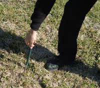 A golf club can used as a soil probe.(Howard Garrett/Special Contributor)