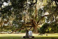 Mark Portier and Maresa Volante sit in the shade of the Tree of Life, or Etienne de Bore Oak, which was planted in 1740 in Audubon Park in New Orleans.(Rose Baca/Staff Photographer)