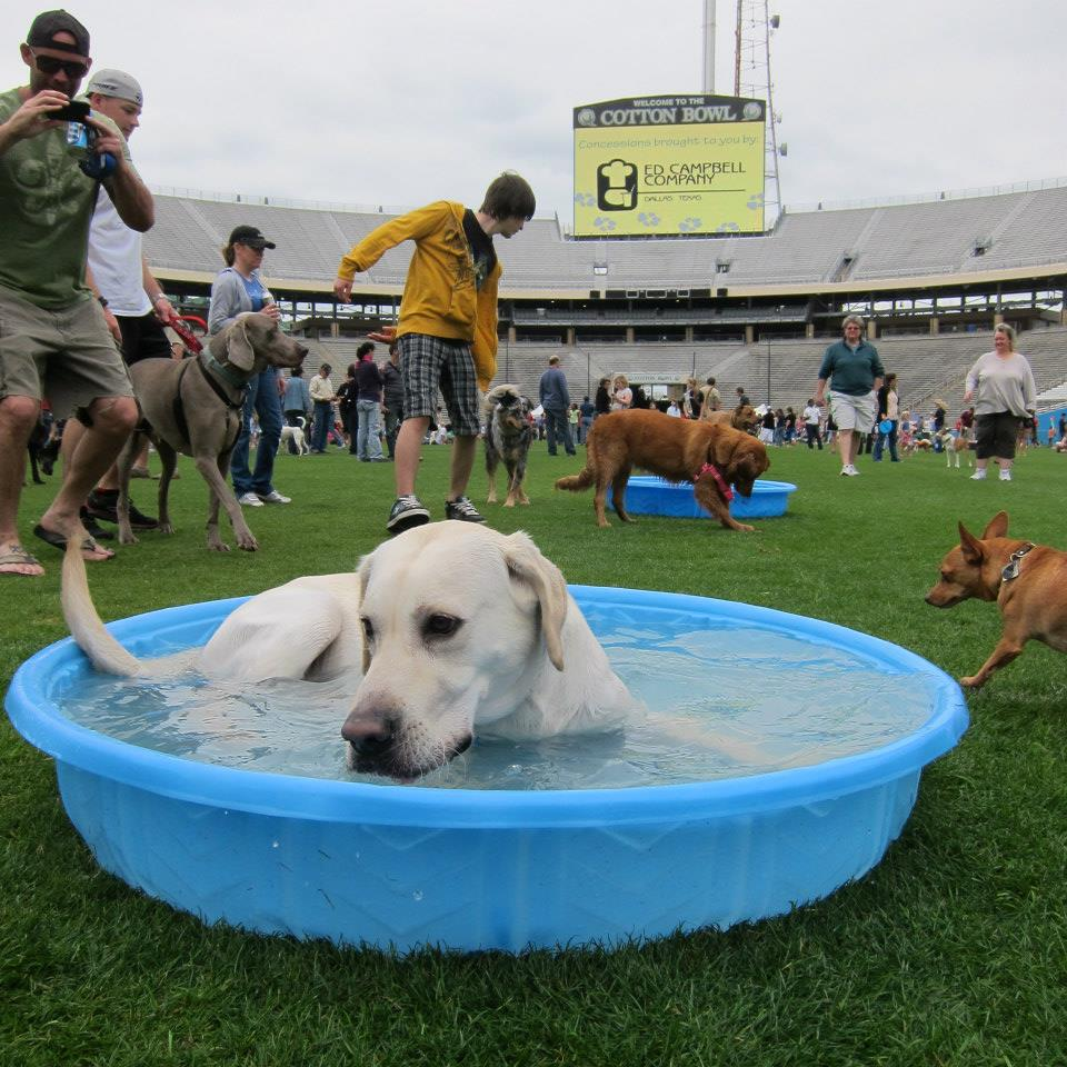 Dog About Town Playtime And Brews On Tap This Weekend Pets