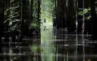 An old logging canal cuts through Bayou Sorrel in the Atchafalaya River Basin in Louisiana. (Gerald Herbert/The Associated Press)