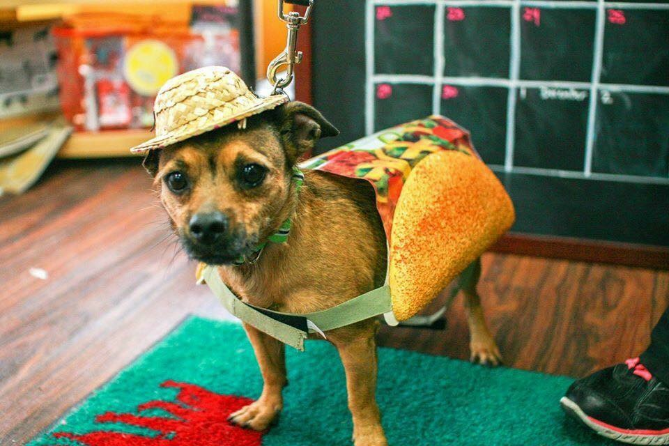 Dog About Town: Celebrating Cinco and more things to do | Pets | Dallas News