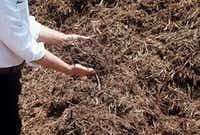 Shredded native tree trimmings (in this case cedar) make the best choice for mulch.(Howard Garrett/Special Contributor)