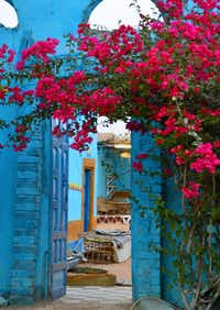 Bougainvillea blossoms drape the entryway of the Sahloul family compound. (Marilyn Jones)