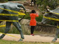 A tourist from China is framed by two of the bronze steers, created by Glen Rose artist Robert Summers, at Pioneer Plaza in downtown Dallas.(Ron Baselice/Staff Photographer)