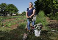 Amanda Vanhoozier tends to her flower garden in Coppell.(Jason Janik/Special Contributor)