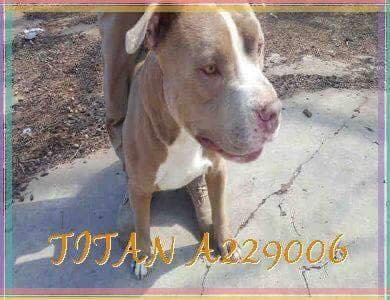 Dog shot in head, dumped day after it was adopted from