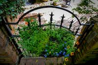 Gate at a Flower Child Plants' client's home in Dallas.(Robert W. Hart/Special Contributor)