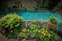 Poolside flower beds at a home in Dallas managed by Flower Child Plants.(Robert W. Hart/Special Contributor)