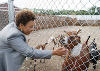 Congresswoman Barbara Lee (CA-13) pets Lucy, a goat at Bonton Farms, during a Pathways Out of Poverty Listening Tour in Dallas on Friday, June 1, 2018. The group visited Bonton Farms, Jubilee Park and Community Center and the Promise House in Dallas.(Vernon Bryant/Staff Photographer)