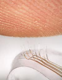 """<p><span style=""""font-size: 1em; background-color: transparent;"""">Electronic whiskers created by a team that includes UTD researchers sense a fingerprint.</span></p>(Jonathan Reeder)"""