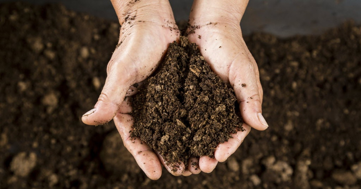 How to detox your soil after a contamination gardening - Terriccio fertile ...
