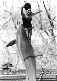 It's kind of weird today to imagine that Six Flags once had dolphins.(Joe Laird/The Dallas Morning News)