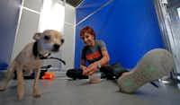 Pia Silvani, Director of Behavioral Rehabilitation at ASPCA, trains Cinnamon with treats at SPCA of Texas in McKinney, Texas, Thursday, July 19, 2018.(Jae S. Lee/Staff Photographer)