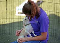 Behavior Coordinator Kelly Atkins gets a lick from Pippin while she demonstrates how she trains dogs in the behavior modification program at SPCA of Texas in McKinney, Texas, Thursday, July 19, 2018. (Jae S. Lee/The Dallas Morning News)(Jae S. Lee/Staff Photographer)