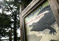 A sign warning about the presence of alligators stands near the shore of the lake in the Caddo Lake National Wildlife Refuge.(Guy Reynolds/Staff Photographer)