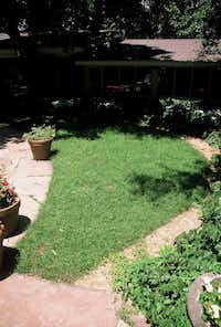 Reveille turfgrass, a cross of Kentucky bluegrass and Texas native bluegrass, is known to grow better in shade.(Howard Garrett/Special Contributor)