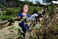 Sophia Terry, 6, tends to a wildflower garden bed with her mother Maria Amaya, 36, in the Edwin J. Kiest Elementary School garden.(Ben Torres/Special Contributor)