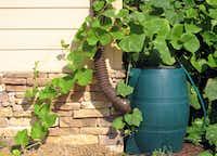 A rain barrel conserves water.(Dreamstime/TNS)