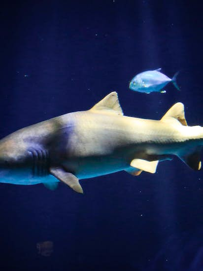 Galveston County shark attack victim now must deal with flesh-eating
