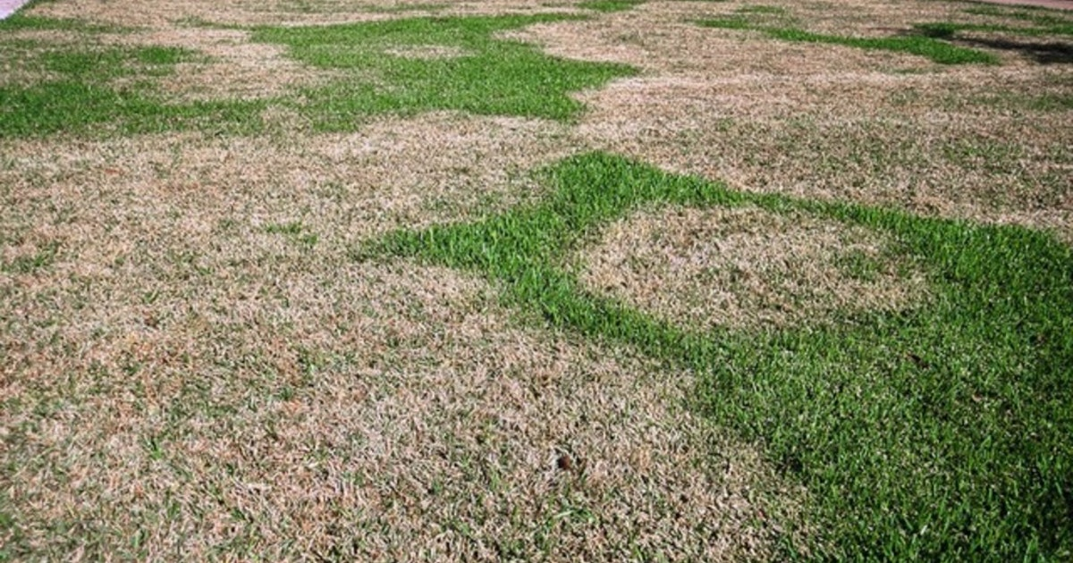 These are the main reasons your lawn looks so bad right now