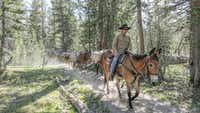 The Vogelsang Camp's mule train supplies the camp with firewood and perishables three days a week.(Brian Irwin/Special Contributor)