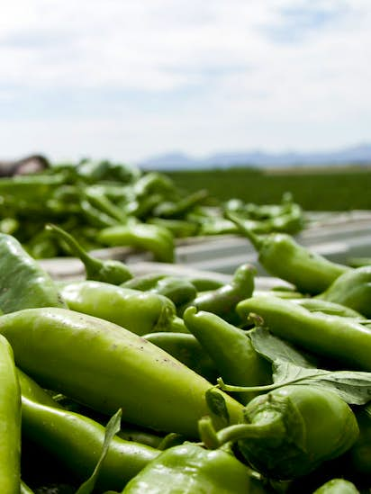 Check Out The Hatch Chile Specials This Weekend At Dallasarea - Farm to table dallas