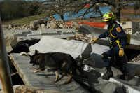 "Canines and a search and rescue task force member at ""Disaster City"" in College Station train to save people from rubble piles.&nbsp;(<p><span style=""font-size: 1em; background-color: transparent;"">Texas A&amp;M Engineering Extension Service</span></p>)"