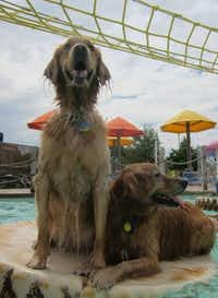 Wags & Waves is Saturday at the Hawaiian Falls in Garland.(File Photo/Tatia Woldt)