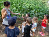 Teacher Wendy Leanse shares okra and peppers with pre-K students at Temple Emanu-El's garden in Dallas(Ron Heflin/Special Contributor)