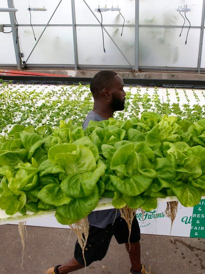 Big Tex Urban Farms now focused on hydroponic growing to help feed