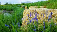 The 14-acre Bluestem Park in Fort Worth was restored to its original Blackland Prairie state, with 50 native plant species and 500 native trees and shrubs.(Debra Hale/Hillwood Properties)
